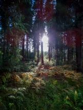 Forêt Domaniale des Andaines